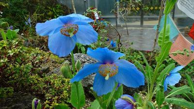 花博記念公園鶴見緑地(05) 咲くやこの花館 その5。