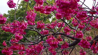 花博記念公園鶴見緑地(10)完 大池を一周し、レストハウスつるみで昼食を摂り帰宅しました。