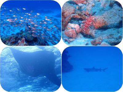 石垣島2019春(8)竹富島・黒島ダイビング:小さい生き物から大物のサメ、マンタまでめまぐるしく