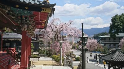 平成最後のお花見①まずは身延山から by 日帰りバス