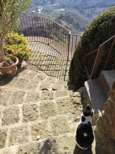 想い出の「天空の城チヴィタ・ディ・バーニョレージョ」は猫が道案内