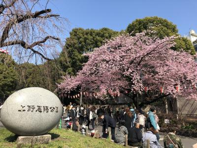 桜の開花前の上野公園を散歩した