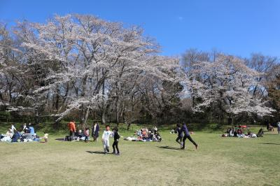 佐倉市散策(50)・・日本百名城、佐倉城址に咲く1,100本の桜を訪ねます。