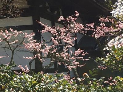 2019梅咲く京都へ 日帰り半日旅