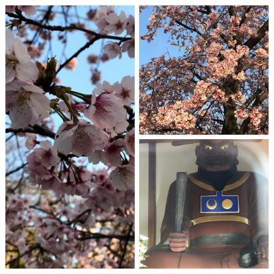 2019,3月 閻魔大王様と桜