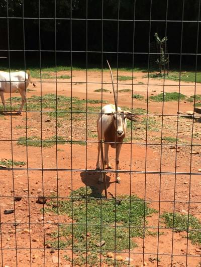 南アフリカ ヨハネスブルグ動物園