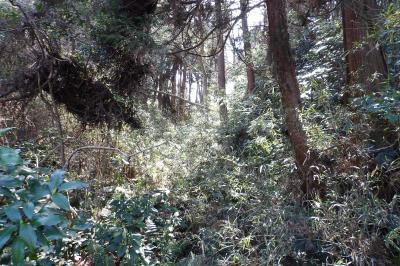 蛇居ヶ谷の大堀切は切通跡-2019年春