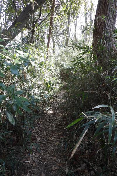 瓜ヶ谷やぐら群から葛原岡ハイキングコースへ戻る