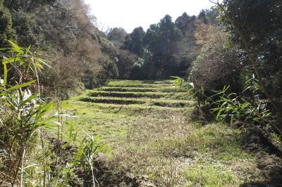 竹藪の奥の棚田