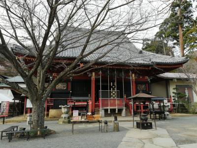 雨引観音で河津桜はちょっと遅かった