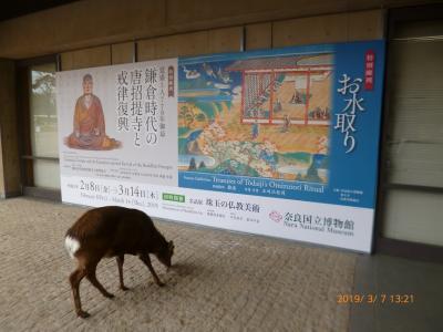 奈良公園散策('19年3月)