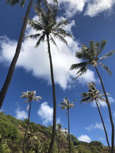ハワイ2年ぶり3回目の旅
