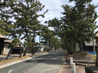 旧東海道舞阪宿の松並木散策と魚あらで海老天丼の昼食