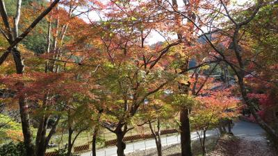 紅葉ツーリング 京都市西部(2018.11.18)