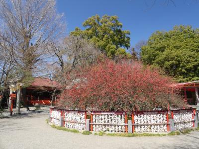 「冠稲荷神社」のボケ_2019_7分咲きくらいですが綺麗でした。(群馬県・太田市)