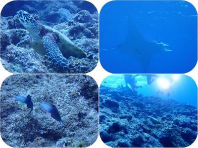 石垣島2019春(14)黒島ダイビング:またまたマンタとウミガメ