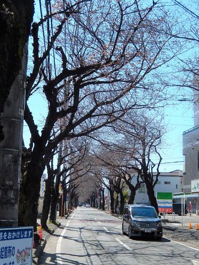 ふじみ野市亀久保さくら通りの桜の開花状況