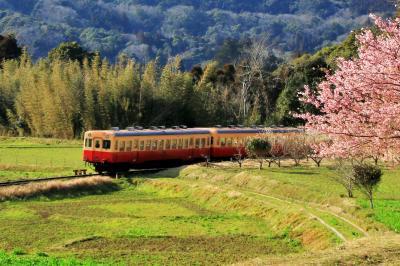 早春の房総 小湊鉄道と沿線の菜の花めぐり