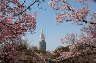 新宿御苑から飛鳥山公園へ、花見
