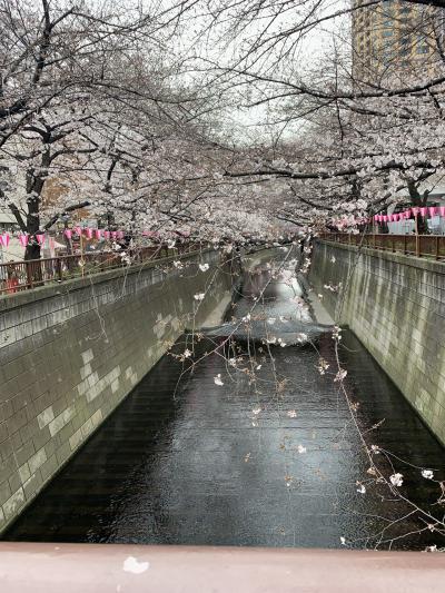 桜咲く目黒川。