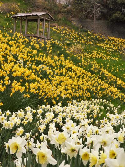 花とみどりの島・淡路島の春