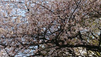 母娘東京への旅1 ~上野恩賜公園へお花見に行く