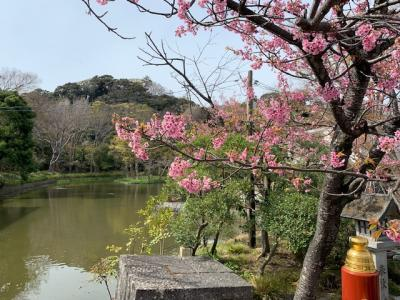 春の鎌倉へ