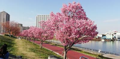 汐入公園で陽光 2019