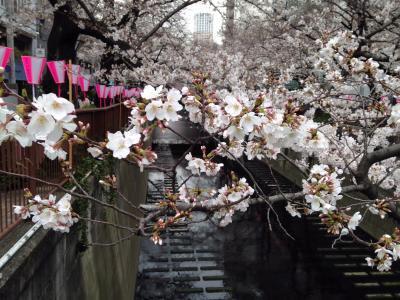中目黒桜まつり2019
