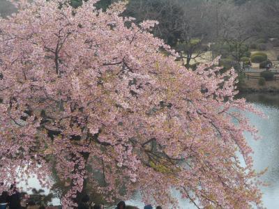 青梅街道から内藤新宿を経て新宿御苑でお花見