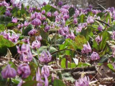 野菜ソムリエ & 春の花