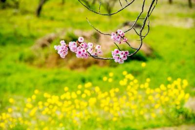 桜づつみ公園の陽光 2019