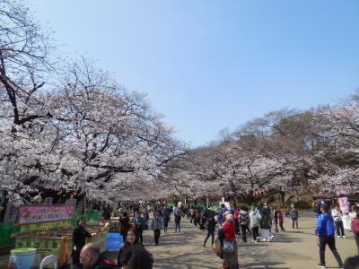 満開にはちょっと早めだと思いましたが、有給休暇を取って平日の朝に上野恩賜公園で花見しました