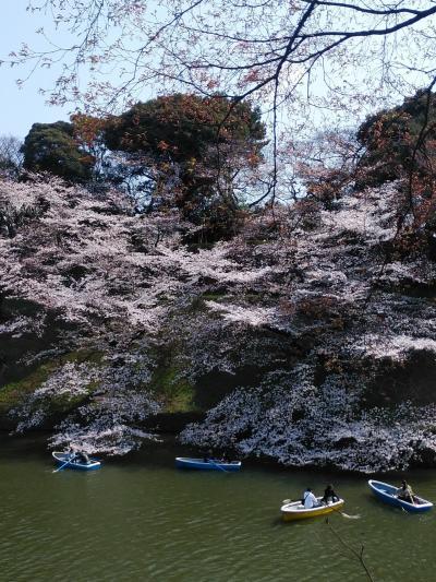 3/27 桜ダブルヘッダー 千鳥ヶ淵、靖国神社&茨城県龍ヶ崎 般若院のしだれ桜