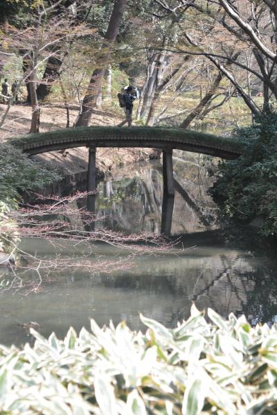 東京散歩 駒込駅から六義園へ行きました。
