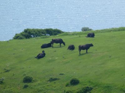 隠岐の島で大自然とのふれあいを体感