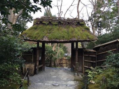 京都嵐山 平清盛ゆかりの祇王寺、保津川下りとモンキーパークへ