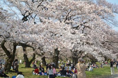 東京散歩 300年以上の歴史がある小石川植物園
