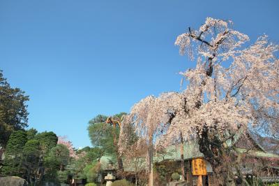 桜咲き始めた川越をちょこっと散策(2019年3月27日)~喜多院と蔵の街