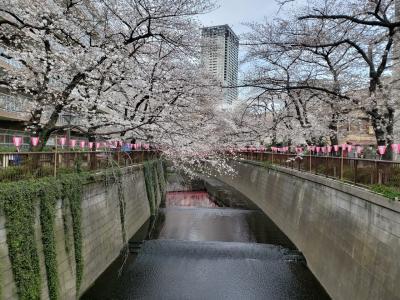 シニアトラベラー 昨年のリベンジ!都内お花見バスツアー満喫の旅