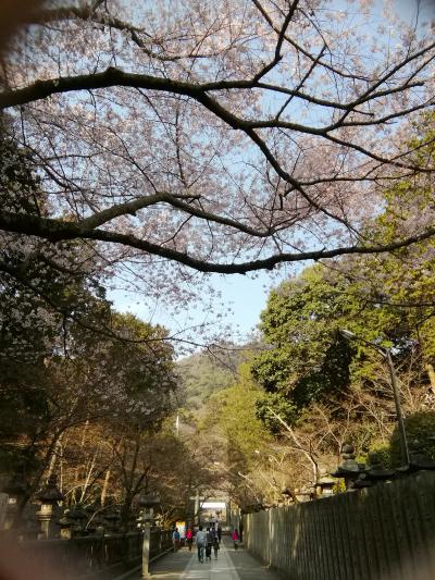 夫婦で珍道中、桜咲き始めの金刀比羅宮