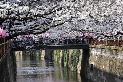 目黒川の桜まつり2019 ~目黒川上流中流の花見散策~(東京)