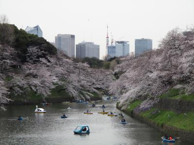 2019年3月 満開間近の桜(九段下)