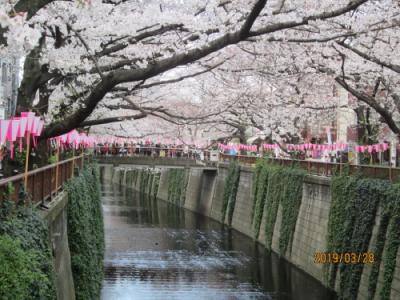 東京の中目黒・目黒川・七分咲桜