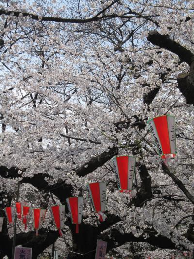 おのぼりさんが行く♪初めての上野公園で桜♪