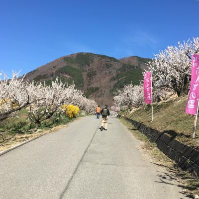 春NAGANO①【あんずまつり】