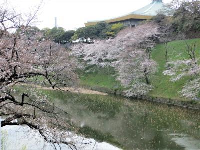 桜を追って 皇居の周りで!(九段下 - 日比谷)