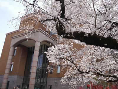 国立市大学通りと一橋大学の桜☆ハンバーグ イチ☆2019/03/27