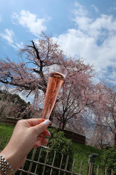 2019年3月 一本の枝垂れ桜に魅せられて♪(観光編)~「高台寺」~「円山公園」~「本満寺」~「平野神社」~