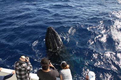 ザトウ鯨に魅せられて!